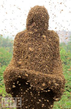 """Very cool, but how does he - or she - breathe?  Can you say """"bees up the nose""""?      http://www.life.com/gallery/61901/covered-in-bees#index/9"""