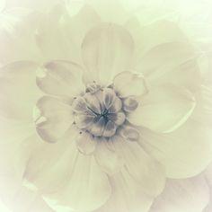 Nieuw in mijn Werk aan de Muur shop: Hart van de dahlia, monochroom