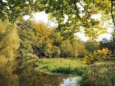 Wohldorfer Wald und Duvenstedter Brook bei Hamburg