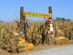 corn maze never have I ever! Until this year a must do!