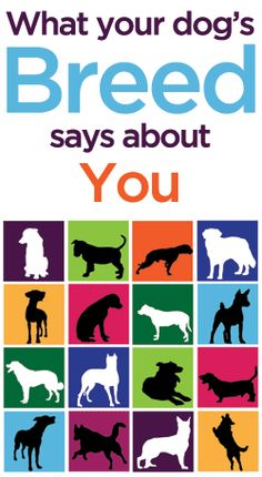 What Your Dog's Breed Says About You-