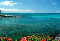 Amazing day on Maui! Photo of Honokeana Bay at Napili Point Resort.  The coral is so clear....