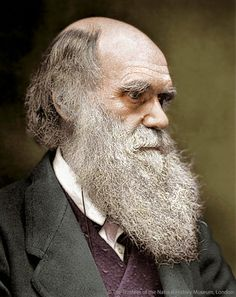 Charles Darwin, taken from a colourized photo found in his letters at the Natural History Museum General Library.