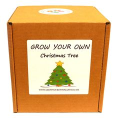 Grow Your Own Christmas Tree Plant Kit - Planting kit for children and adults Christmas Tree Kit, Garden Gifts, Grow Your Own, Planting, Fathers Day, Children, Birthday, Young Children, Plants