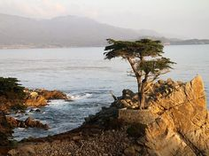 The Lone Cypress along 17-Mile Drive in Pebble Beach
