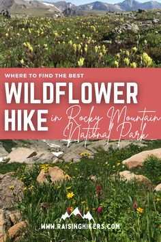 """Is there a hike within a 1.5-hr drive of Denver that offers solitude and a magnificent alpine experience? The Hutcheson Lakes / Cony Basin in Rocky Mountain National Park (RMNP) represents a resounding """"yes"""" to that question. See why it's the best wildflower hike in RMNP. #RockyMountainNationalPark #RMNP #WildflowerHike Hiking With Kids, Colorado Hiking, Thing 1, Mountain Hiking, Rocky Mountain National Park, Family Adventure, Solitude, Rocky Mountains, Lakes"""