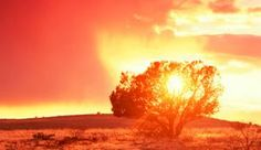 Why God Spoke to Moses from the Burning Bush: God spoke to Moses through a burning bush.