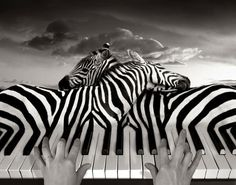 I think it is really cool how the designer turned the zebras stripes into the keys on the piano.