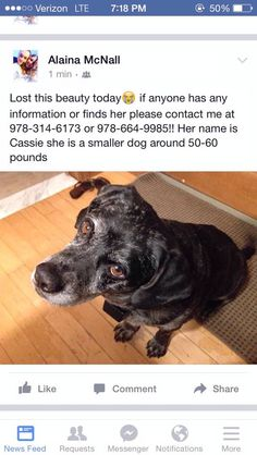 Lost Dog - Mixed Breed in NORTH READING, MA      Pet Name:Cassie (ID# 102679) Gender:Female Breed:Mixed Breed Breed 2:Labrador Retriever Color:Black Color 2:Silver/Grey Pet Size:Large (40-75lbs) Pet Age:8 years Date Lost:08/04/2015 Zip Code:01864 (NORTH READING, MA) Phone:(978) 314-6173