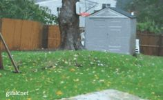Nature picking out this tree from a backyard:   24 Oddly Satisfying GIFs Of Random Objects Being Destroyed