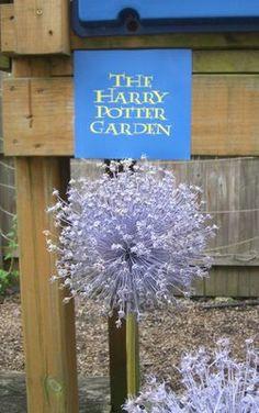 The Harry Potter Garden Unusual Plants, Exotic Plants, Harry Potter Plants, Bat Flower, Planting For Kids, Indoor Flowering Plants, Large Flower Pots, Starting A Garden, Blue Garden