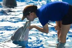 Winter the Dolphin lives at the Clearwater Marine Aquarium, in #Clearwater