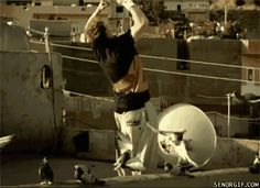 Watch Pigeon copy a backflip parkour Animated Gif Image. Gif4Share is best source of Funny GIFs, Cats GIFs, Dogs GIFs to Share on social networks and chat.