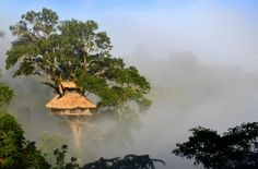 Treehouses on top of the world: Zip-lining to lodgings in Laos - The Washington Post