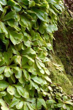 Colorado Carnivorous Plant Society Leilani Nepenthes I'm Jeremiah Harris, I enjoy good people,...