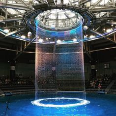 #dolphin #show #snow #naked #shinagawa #tokyo #aquarium #water #fountain #creative