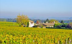 Panoramic views at Peyraguey Maison Rouge Bed & Breakfast in the heart of the vineyard on the Wine Route of Bordeaux en Graves and Sauternes.