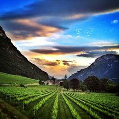 #Villa #Bortolazzi - #Trento #Rovereto #matrimoni #comunioni #cresime #feste #eventi #meeting #foto #instagram #paesaggi #tramonto Discovery, The Good Place, Vineyard, Golf Courses, Villa, Amazing, Places, Travel, Outdoor