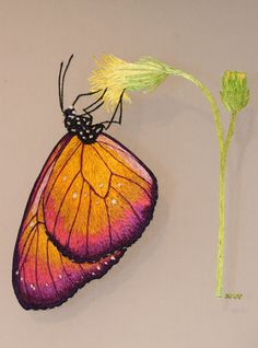 Feeding Butterfly with Nikki Delport-Wepener from Hong Kong. Learn this double side embroidery project under the excellent skills of Nikki at the Koala Conventions Embroidery & Textile Event, in Brisbane, 4th - 12th July 2015