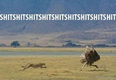 15 Down Right Funny Cheetah Memes