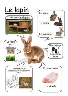 Printable page about le lapin Core French, French Class, French Lessons, French Teacher, Teaching French, How To Speak French, Learn French, French Education, French Resources