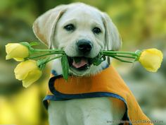 Cute Animals Wallpaper Download | Download Wallpaper,Desktop ...