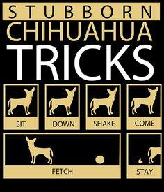 stubborn chihuahua tricks by teeshoppy #chihuahuadaily #teacupdogs…