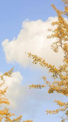 Plant Wallpaper, Soft Wallpaper, Flower Phone Wallpaper, Graphic Wallpaper, Iphone Wallpaper Tumblr Aesthetic, Sunset Wallpaper, Scenery Wallpaper, Painting Wallpaper, Aesthetic Pastel Wallpaper