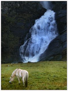The Norwegian Fjord Horse - a delightful creature. I would love to make it to the mountains of Norway where this breed originated - as did some of my ancestors!
