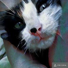 Ölen bir kedi için ne yazılır veya tuttuğunuz yas'ın acısı nasıl anlatılır bilemedim, ağıt mı?, özlem mi?, özlemek mi? senin için ...