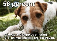 56 percent of dogs and puppies entering U.S. animal shelters are destroyed