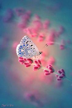 ʚiɞ Borboletas são tão belas ʚiɞ: εїзBorboletandoεїз   E Deus coloriu as borboleta...