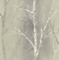 White Birch Trees On Greyish Beige Background Wallpaper SG50308 #Wallquest