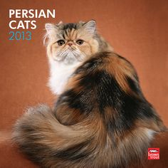 Persian Cats Wall Calendar: The Persian cat comes from Iran and its neighboring countries. Though photographers have long favored the magnificent white Persian, these cats appear in a wide variety of colors.  $14.99  http://calendars.com/Cat-Breeds/Persian-Cats-2013-Wall-Calendar/prod201300004389/?categoryId=cat00183=cat00183#