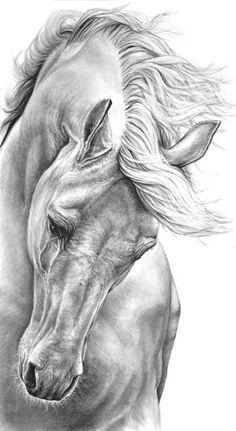 Drawing Pencil Portraits - Hourse Discover The Secrets Of Drawing Realistic Pencil Portraits Painted Horses, Portrait Au Crayon, Pencil Portrait, Horse Drawings, Animal Drawings, Sketches Of Horses, Drawing Animals, Cartoon Drawings, Arte Equina