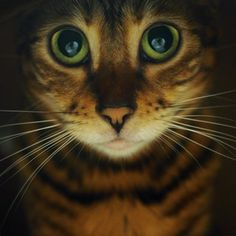 When the night comes my cat looks like this : aww