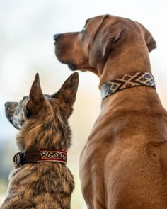 Dog is such a very small word for something that takes up so much room in your heart 🖤 #kilimdogcollars by #silviagattin 📸 @nagel_katharina_ @cmj.tierfotografie #handmade #dogaccessories #instadog #dogsofinstagram #doglover #hundehalsband #kilimhalsband #oneofakind #walkyourdoginstyle #hundeliebe #hund #handmadewithlove Small Words, Dog Accessories, Your Dog, Dog Lovers, Heart, Dogs, Handmade, Animals, Instagram