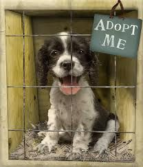 Want to adopt a pet but unsure of how to go about it? We can help!