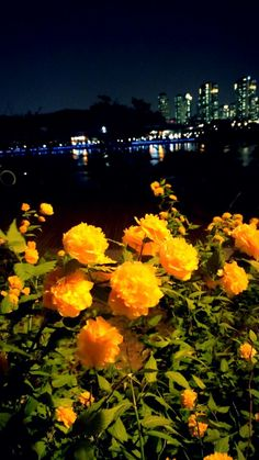 night view with flower