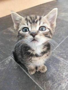 """Emergency Kittens on Twitter: """"http://t.co/GmEssTZR2o"""""""