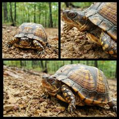 Close up photography featuring turtles at Shenandoah River State Park, Va