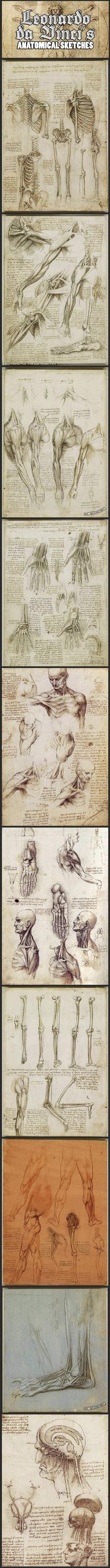 Leonardo da Vinci's anatomical sketches…  Rumor has it that he discovered all this by raiding graves and cutting up fresh corpses. Think it's true?