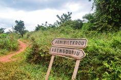 Agnibilékrou - jungle road Ivory Coast