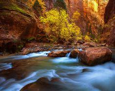 """""""Big Springs, Narrows"""" by Chris Moore; Virgin River, Zion National Park, Utah"""
