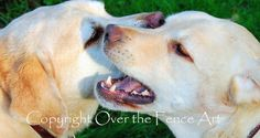 Labradors Handcrafted Greeting Card  Whisper by overthefenceart