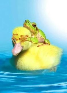So funny and so cute - frog and duck