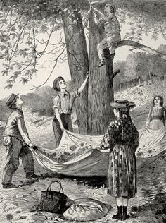 Nutting Party.  Chestnutting by Winslow Homer from Every Saturday, An Illustrated Journal of Choice Reading, October 29, 1870.