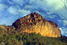 Гора Капутар – #Австралия #Новый_Южный_Уэльс (#AU_NSW) Обособившаяся прежде других континентов Австралия поистине удивительна. Это не только родина причудливых ехидны, утконоса, знаменитого тасманского дьявола или многочисленных животных, все свое носящих с собой. Но и вот таких огромных флуоресцирующих плотоядных розовых слизняков. Обитают эти медлительные каннибалы в лесах горы Капутар, что находится на территории одноименного заповедника в Новом Южном Уэльсе…