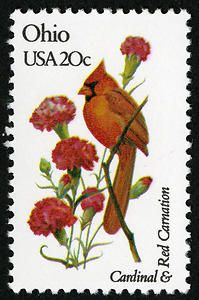 Ohio - Cardinal and Red Carnation