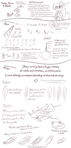 MLP - Basic Anatomy Guide 2 [Horn + Wing(Incomp)] by DShou on deviantART